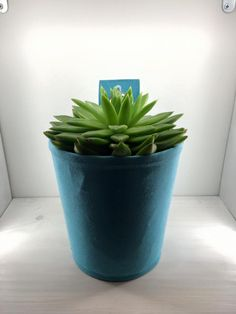 It stands, hangs, grows and works! That's The Green Pot - a fascinating wall planter that will innovate your home!  #bloomingwalls #thegreenpot #plant #succulents #pot #wallplanter #planter #verticalgardening #gardening #green #blue #design #aesthetic
