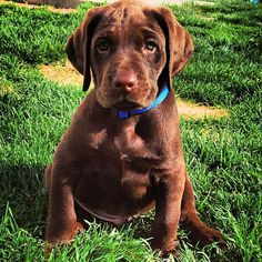 10 Facts about puppies