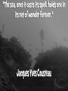 Some scuba diving quotes for you to share. On the left side of the screen you will see the icons for sharing. Scuba Diving Quotes, Shark Diving, Great Big Sea, Jacques Yves Cousteau, Dive Shop, Sayings And Phrases, Water Me, Riviera Maya, Snorkeling