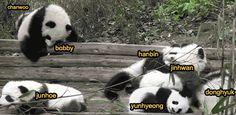 """iKON basically"" LOL so accurate!"