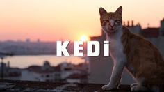 A Closer Look into Kedi #movies