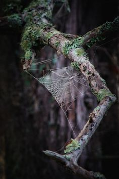 Web by Michelle Moprris