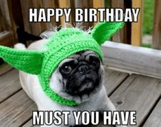 Memes - Ultimate Resource of Funny Bday Memes! Birthday Memes - Ultimate Resource of Funny Bday Memes!,Birthday Memes - Ultimate Resource of Funny Bday Memes! Happy Birthday Dog Meme, Happy Birthday Cupcakes, Birthday Wishes Funny, Happy Birthday Sister, Happy Birthday Images, Birthday Greetings, Birthday Cats, Birthday Memes For Guys, Birthday Humorous