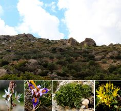 https://flic.kr/s/aHsm7YbPWY   152 The Orchid Hills   Birds and bees, a spring under the microscope, lichens and, oh yes, orchids as this week's #CreteNature visits The Orchid Hills: bit.ly/40saintsIV