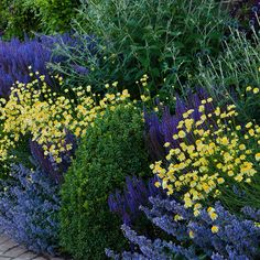 Buy Blue & yellow border collection Blue and yellow border collection: £15.0 Delivery by Crocus
