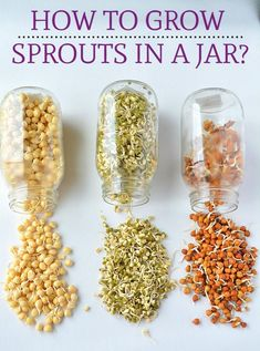 How to make Sprouts.Growing Mung Bean Sprouts, How To Sprout Beans or Moong/Mung at home, How To Make Moong Bean Sprouts growing at home How to make Sprouts in a jar, Make sprouts in canning jar,Sprouting seeds How To Make Sprouts, How To Make Beans, How To Sprout Seeds, Bean Sprouts Growing, Growing Beans, Alfalfa Sprouts, Sprouts Salad, Bean Sprout Salad, Sprouts Recipe