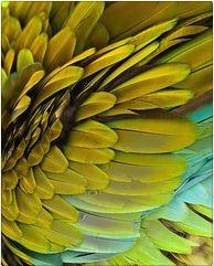 Discover Flor Amazona
