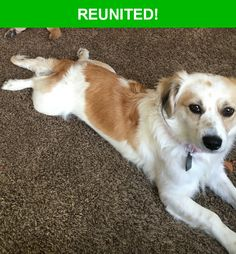 Great news! Happy to report that Hermoine has been reunited and is now home safe and sound! :)