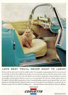 1956 Corvette: I love the cat, Turquoise is my favorite color…..this ad, couldn't ask for more!