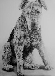 Mollie by stef-g on deviantART
