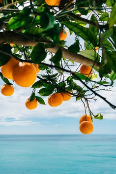 Amalfi Coast Oranges IV Art Print by Bethany Young Photography - X-Small Orange Aesthetic, Nature Aesthetic, Summer Aesthetic, Travel Aesthetic, Quelques Photos, Italian Summer, Amalfi Coast, Aesthetic Pictures, Aesthetic Wallpapers