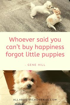 Our dogs are our best friends in the world without a doubt. Show your love and appreciation for these adorable doggos with these 21 inspiring dog quotes. John Grogan, Charles Shultz, Great Quotes, Inspirational Quotes, Cesar Millan, Little Puppies, Bichon Frise, Love You More Than, Dog Quotes