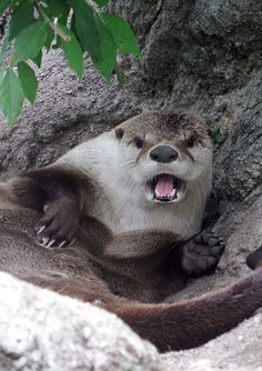 Otter has noticed the paparazzi - September 13, 2016