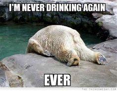 Ours blanc, j'ai soif, comme j'ai soif ! Polar bear, I am thirsty, as I am thirsty! Funny Animal Pictures, Funny Animals, Cute Animals, Party Animals, Bear Pictures, Monday Pictures, Random Pictures, Animal Pics, Mundo Animal