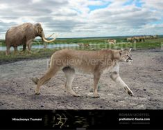 Prehistoric Wildlife, Prehistoric World, Extinct Animals, Animals Images, Fauna, Mammals, North America, Creatures, Cats