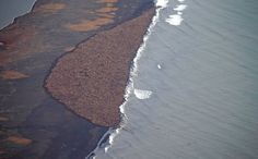 In this aerial photo taken on Sept. 27 and provided by NOAA, some 35,000 walrus gather onshore near Point Lay, Alaska. This is not normally how you would find them. The animals would normally be spread out on the sea ice, but, as you see in the picture, this year the ice has all melted...