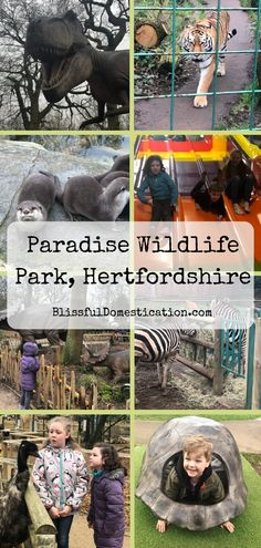 We were lucky enough to be invited along to Paradise Wildlife Park in Hertfordshire for a day out with the kids, a wildlife park with added extras! Days Out With Kids, Family Days Out, Soft Play Area, Indoor Play Areas, Animal Experiences, Love Is Gone, Wildlife Park, Kids Fun, Nice View