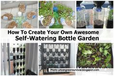 How to create your own awesome self- watering garden