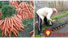 Carrots, Gardening, Pergola, Vegetables, Flowers, Plants, Food, Apollo, Balcony
