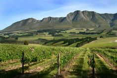 Vineyards near Hermanus, South Africa Provinces Of South Africa, Richmond Hill, Cape Town, Small Towns, Continents, Places Ive Been, Vineyard, Wines, Nature