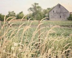 {country living} Country Barns, Country Farmhouse Decor, Old Barns, Country Life, Country Living, Country Roads, Champs, Fields Of Gold, Grass Field