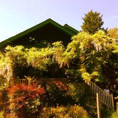 Takoma Park, MD, bungalow