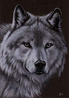 WOLF 3 dog puppy canine loup pencil painting by sandrinesgallery, $12.00