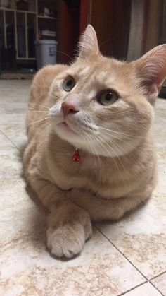 My photogenic cat with weird feet   cats funny pictures