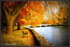 Autumn in Guelph, Ontario. Nothing more beautiful!