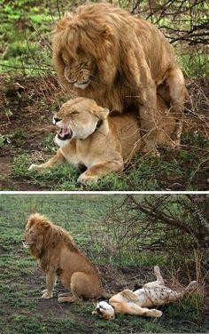 Actually I dominate him. Richard enjoys what I can do. #TooWeakToHandleMe #KiddingHeHandlesMeVeryWell #RBA