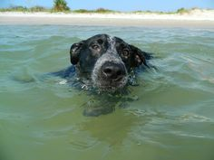 Take your pooch to our dog friendly beach....Smyrna Dunes Park.