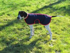 Chevy in his pyjamas Dog Coats, Pyjamas, Chevy, Dogs, Animals, Coats For Dogs, Animaux, Doggies, Animal