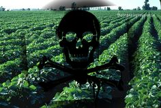 Move Over, Round-up: USDA Approves 2nd Generation GMOs That Can Withstand Even Deadlier Herbicide - See more at: http://www.thedailysheeple.com/move-over-round-up-usda-approves-2nd-generation-gmos-that-can-withstand-even-deadlier-herbicide_092013#sthash.3kwVRWmw.dpuf