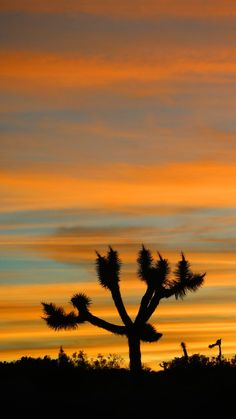 Top 10 Things to do in Joshua Tree National Park just outside Palm Springs California including photography, hiking, climbing, tips, Hidden Valley, Cholla Cactus Garden and climbing!