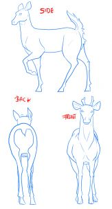 how to draw deer, drawing deer step 2