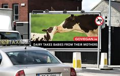 Dairy takes babies from their mothers. Say 'NO' to the cruel dairy industry. Campaign Posters, Advertising Campaign, Reasons To Be Vegan, Day Old Chicks, News Memes, Vegan Society, Vegan Quotes, Why Vegan, Sheep Farm