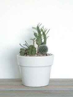 Mini Potted Succulents Tutorial (DIY Tips no.2)