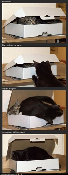 The Battle of the Box- this would happen in my house