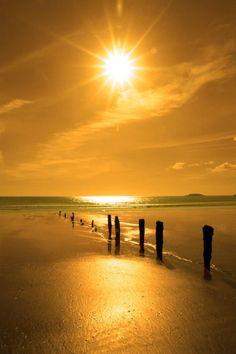 Golden sunshine over the beach   nature     sunrise      sunset   #nature  https://biopop.com/
