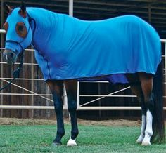 Lycra Full-Body Sleazy #horse #blanket #sleazy