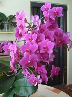 How To Keep Orchids Alive And Looking Gorgeous Easter Flower Arrangements, Easter Flowers, Flower Vases, Pink Flowers, Orchids Garden, Orchid Plants, All Plants, Indoor Plants, Garden Types
