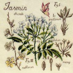 """Милые сердцу штучки: Знаменитая серия """"Etudes de Botanique"""" от Veronique Enginger"""