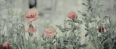 # You want gifs? I'll give you gifs. Aesthetic Header, Aesthetic Gif, Flower Aesthetic, Aesthetic Wallpapers, Flowers Gif, Dark Flowers, Aesthetic Painting, Aesthetic Drawing, Fairy Tail