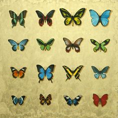 A personal favourite from my Etsy shop https://www.etsy.com/uk/listing/521526716/butterfly-case-signed-giclee-print