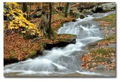 Cunningham Falls State Park.  Come stay with us at Ole Mink Farm and visit Cunningham Falls.  It is only a short drive away!