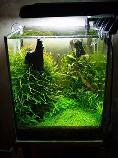 Nano Aquarium, Nature Aquarium, Aquarium Design, Planted Aquarium, Aquarium Aquascape, Tropical Fish Store, Tropical Fish Tanks, Tropical Aquarium, Tropical Freshwater Fish