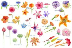Watercolor Edible Flowers Clipart ~ Illustrations on Creative Market