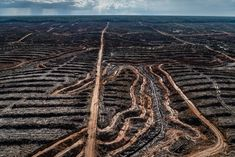 Human society under urgent threat from loss of Earth's natural life Scientists reveal stark decline in biodiversity in damning UN report on planetary health Natural Life, Natural World, Vida Natural, Natural History, Agriculture, Environmental Research, Environmental Degradation, Environmental Change, Environmental Justice