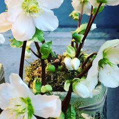 hortensien verbessern das raumklima g rtnergl ck pinterest garten pflanzen und hortensien. Black Bedroom Furniture Sets. Home Design Ideas