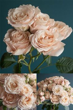 Popular Champagne Rose Varieties: Quicksand, Sahara, Early Grey, Sahara Sensation, and Menta Flowers Nature, Exotic Flowers, Colorful Flowers, Orchid Flowers, Types Of Flowers, Love Flowers, Beautiful Flowers, Floral Wedding, Wedding Bouquets